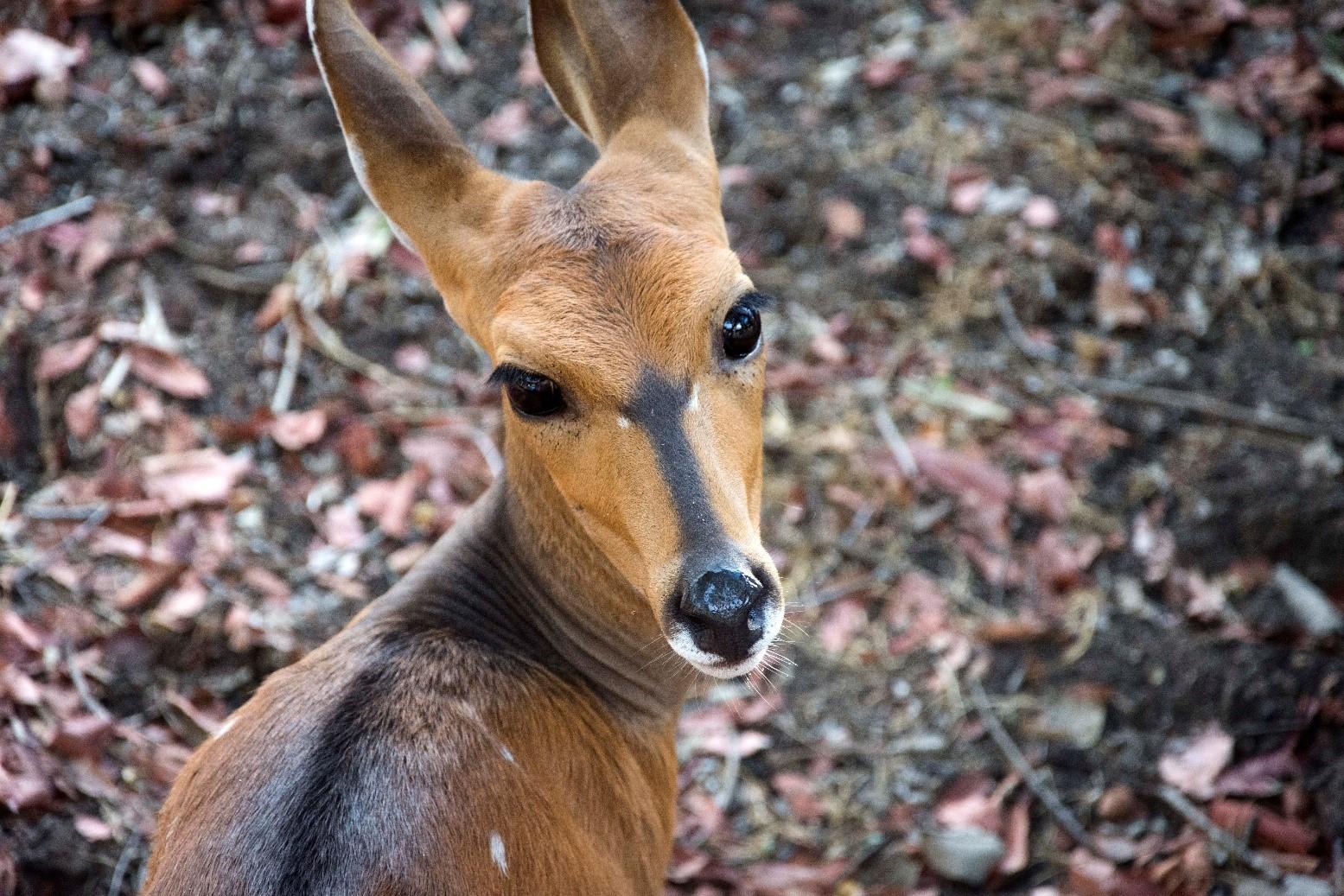 pic 33 deer.jpg