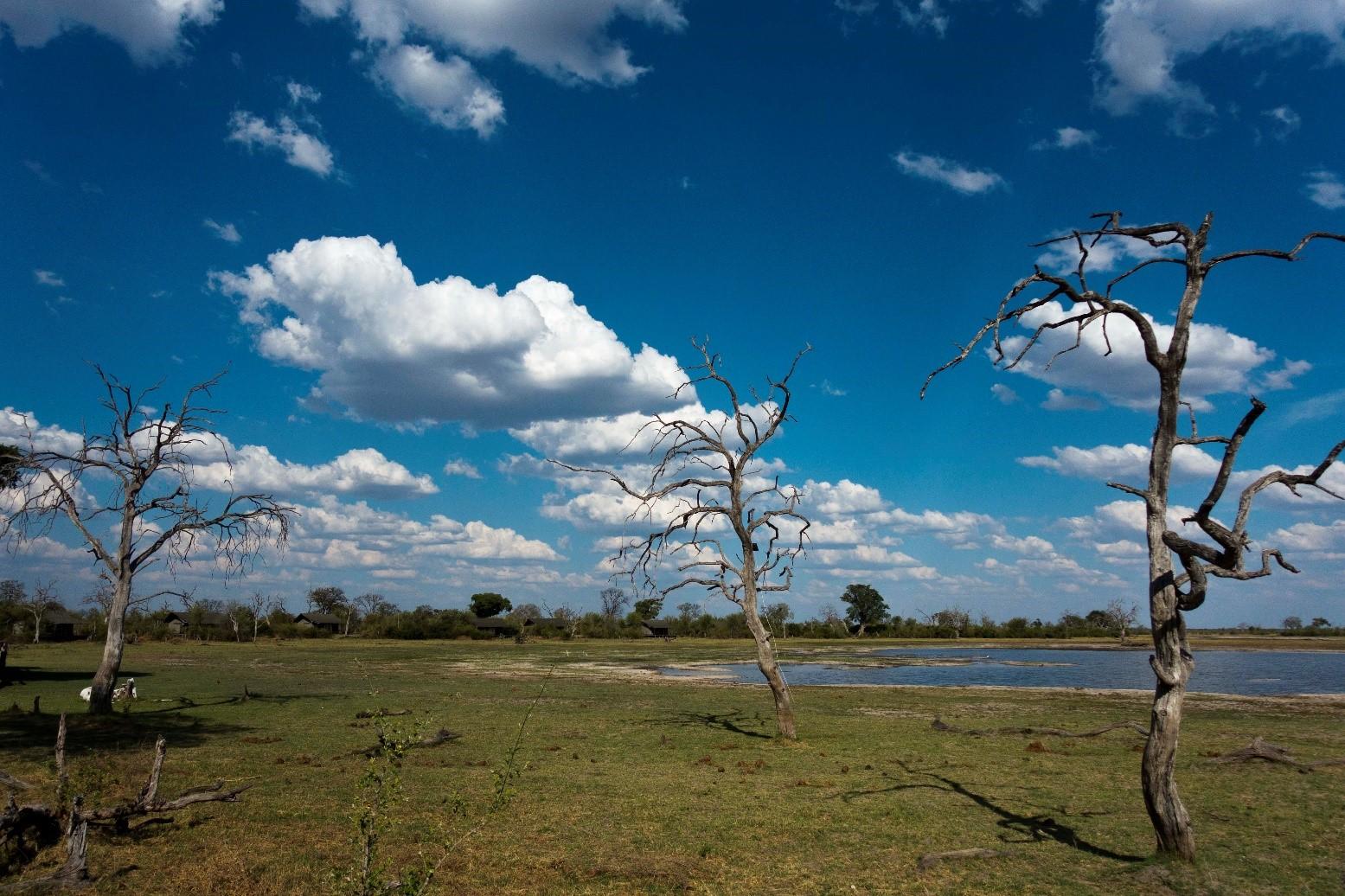 pic 37 trees.jpg