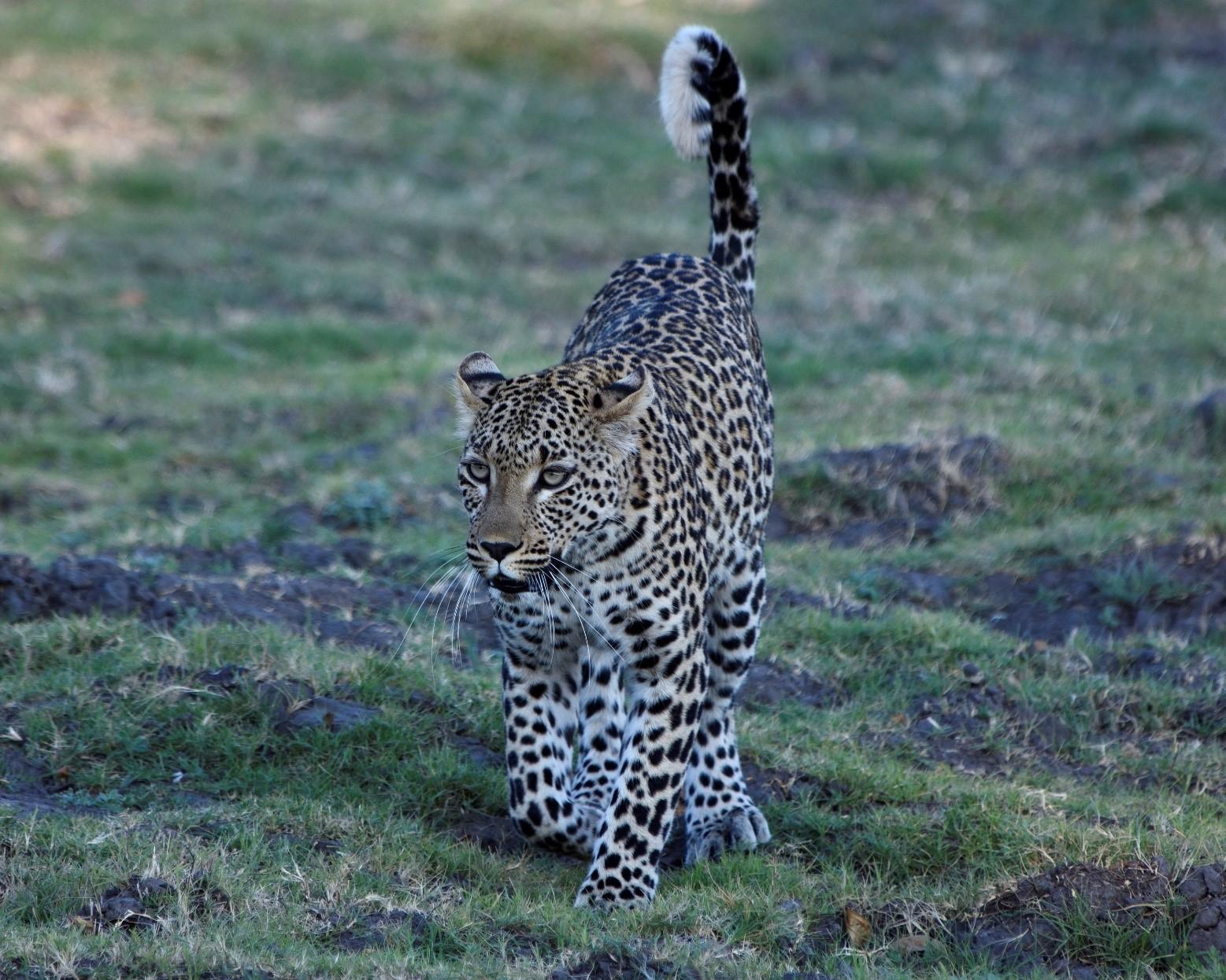 pic 49 cat.jpg
