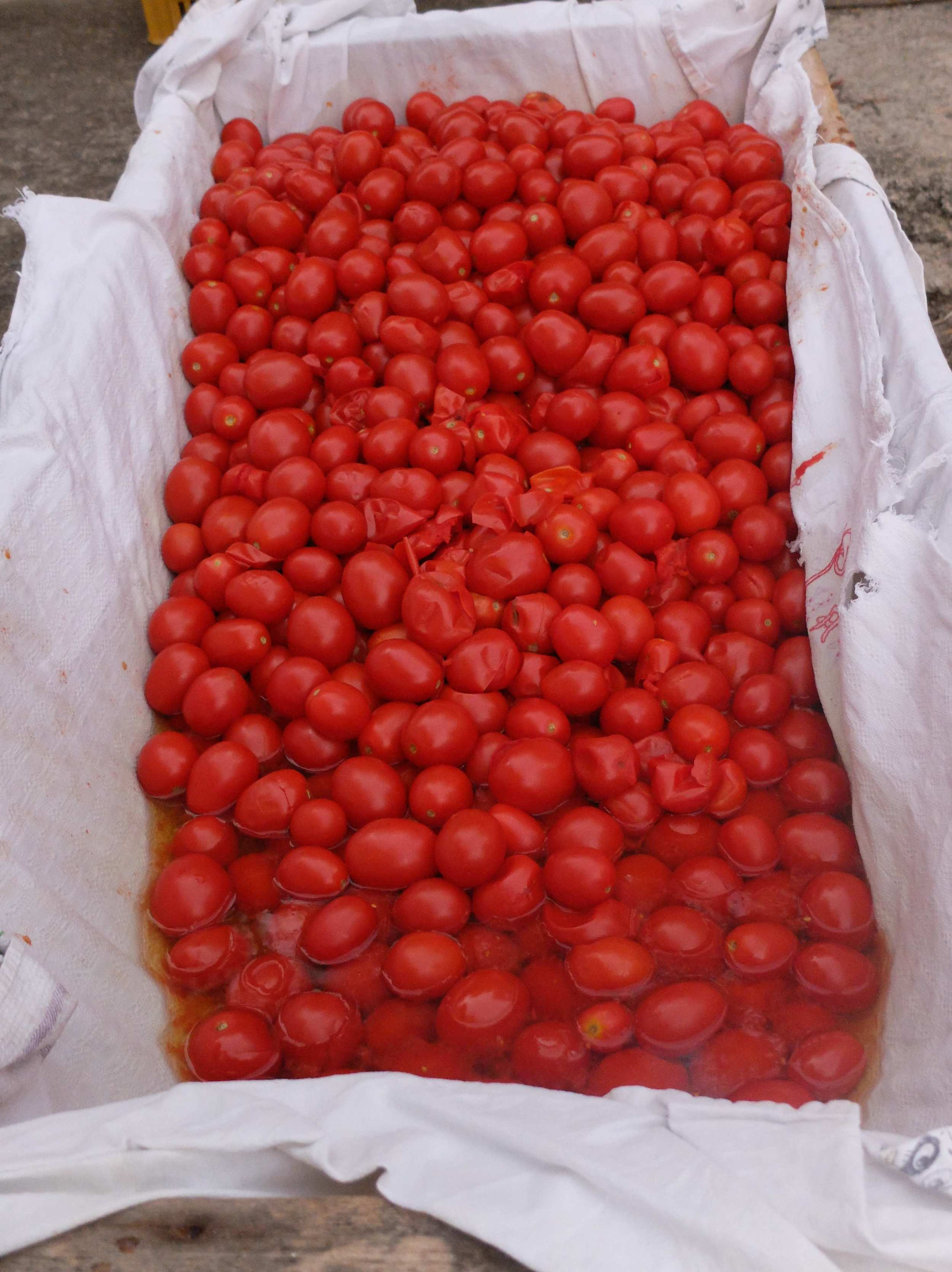 Boiled tomatoes resting in muslin