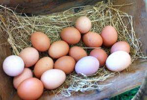 Amber Links & White Leghorn organic eggs