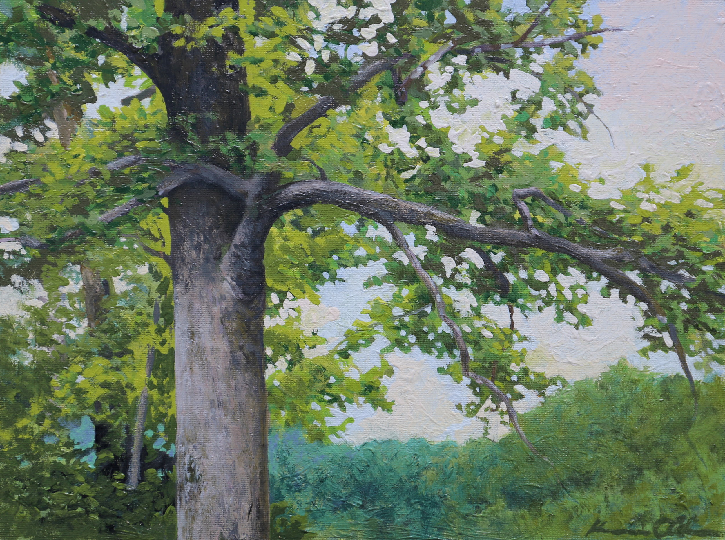 Large Poplar 11 X 14 oil on canvas