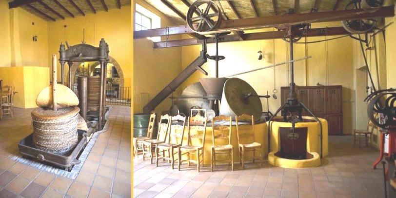 Interior of Oro del Desierto - Number 1 organic extra virgin olive oil in the world!