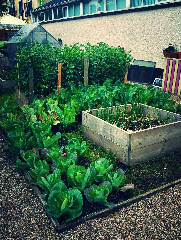 Growing food and fun in the heart of Campsie.