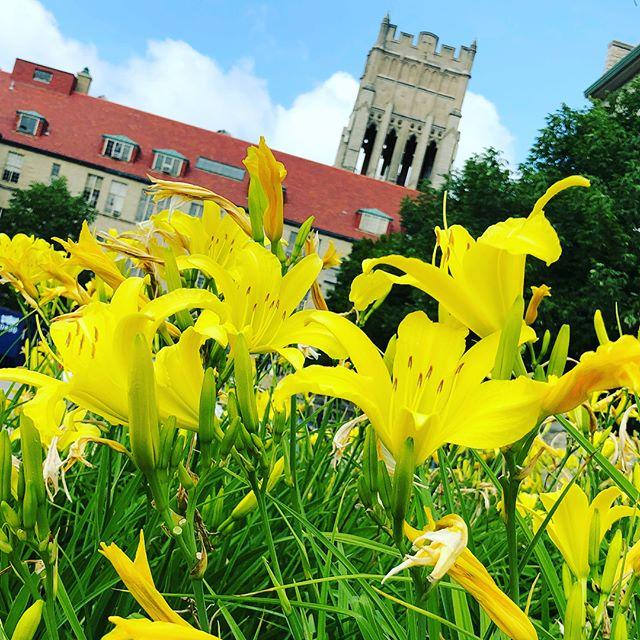 Peaceful places awaiting students' return on campus! #inspiration #campusbeauty #mountmary #highereducation #educatingwomen #education #milwaukee
