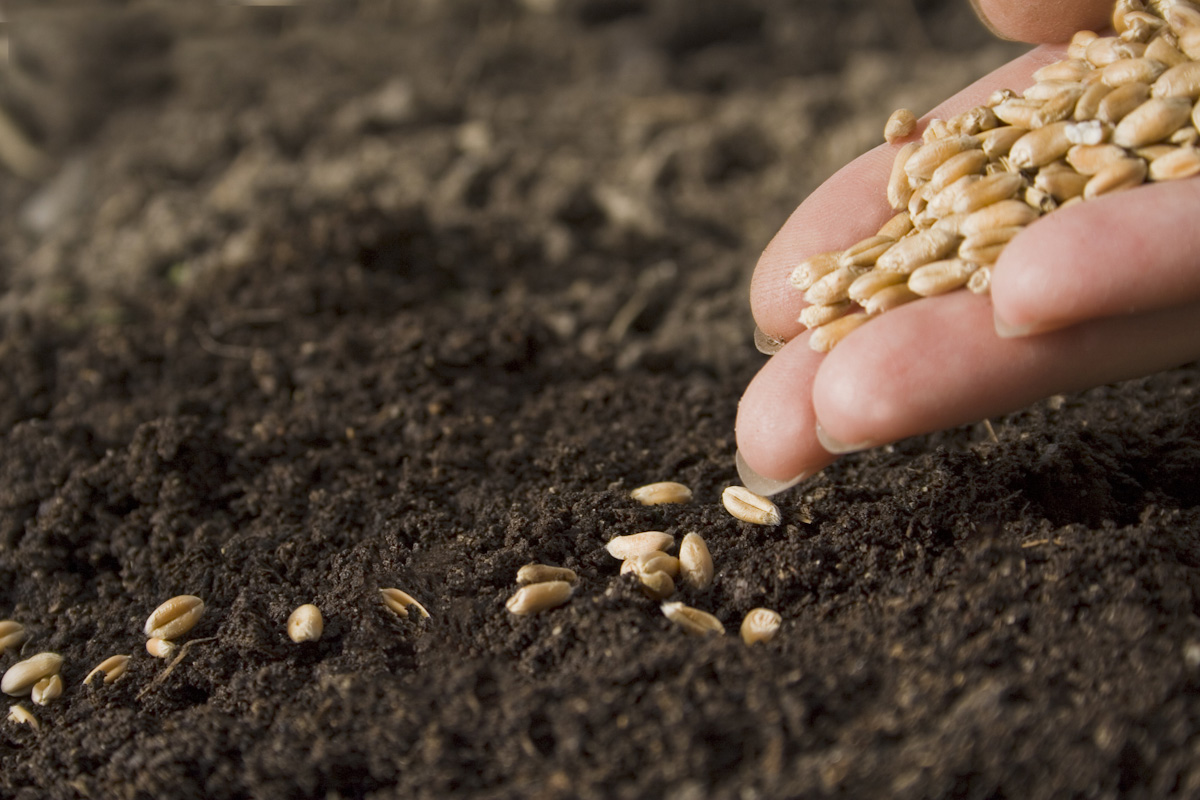 Planting Seeds of Acceptance