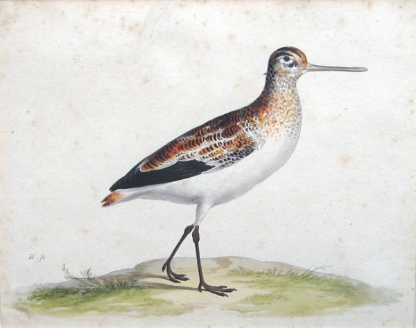 Pieter Holsteyn The Younger | A black-tailed godwit