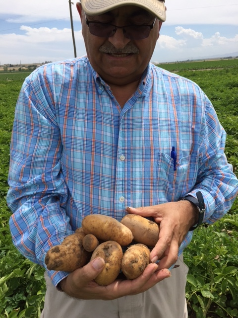 SM-10 Potato Trials 6.JPG