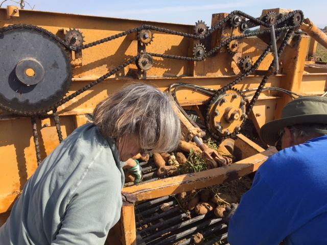 SM-10 Potato Trials 11.JPG