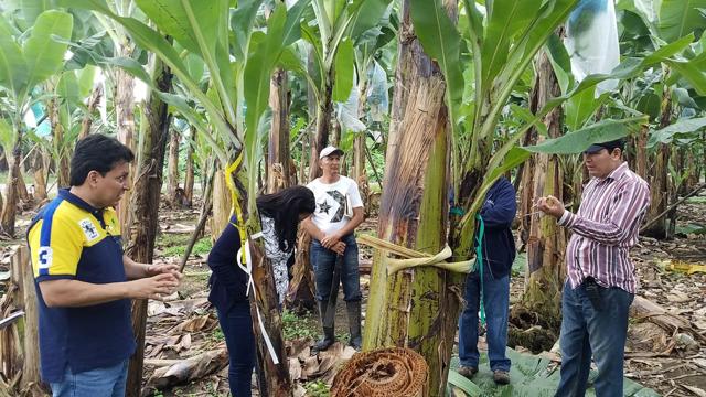 Banna Farm 6.png