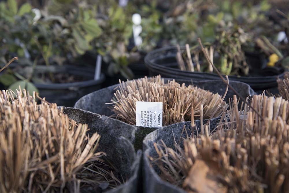 Grasses and forbs for planting ,   late autumn 2017