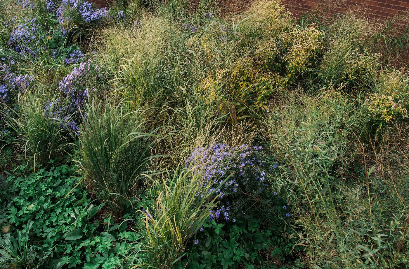 Native plants  (detail) autumn 2018