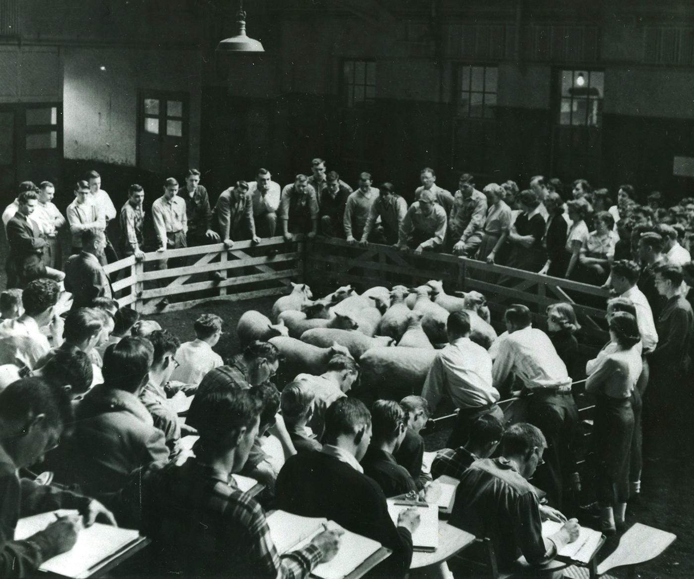 OSU animal sciences classroom , circa 1963