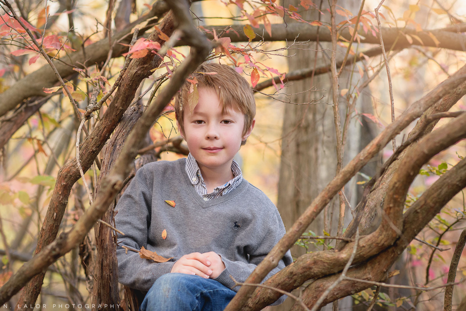 6-year old boy sitting in a tree. Portrait by N. Lalor Photography. New Canaan Nature Center.
