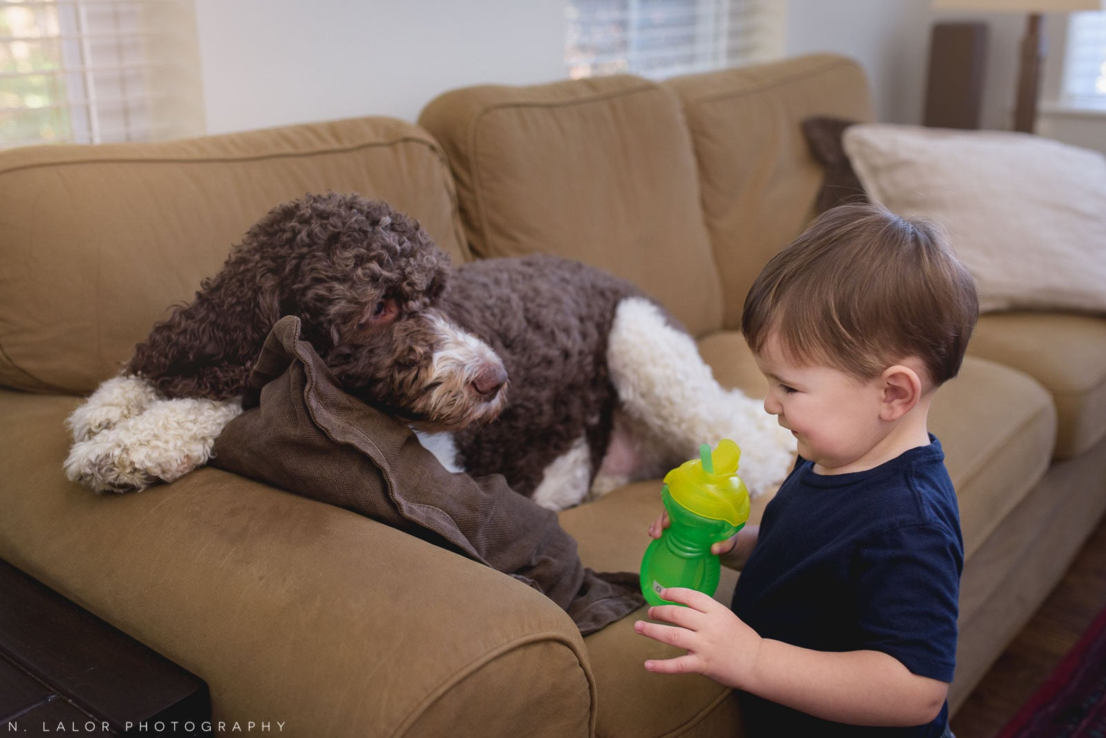 In-home lifestyle portrait of toddler and his family dog. Photo by N. Lalor Photography. Connecticut.