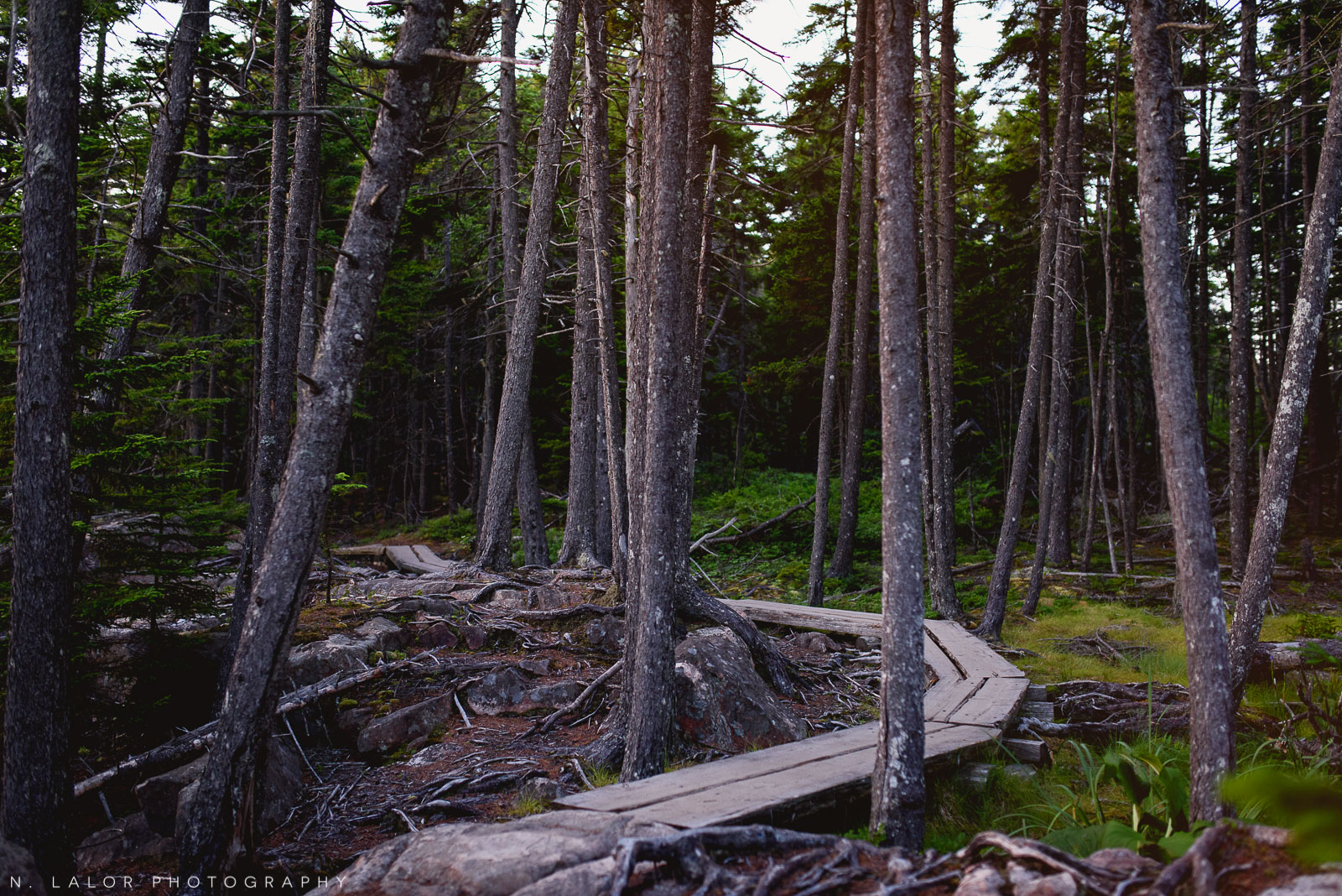 Wooden boardwalk on a hiking trail. Acadia National Park in Bar Harbor Maine. Photo by N Lalor Photography.