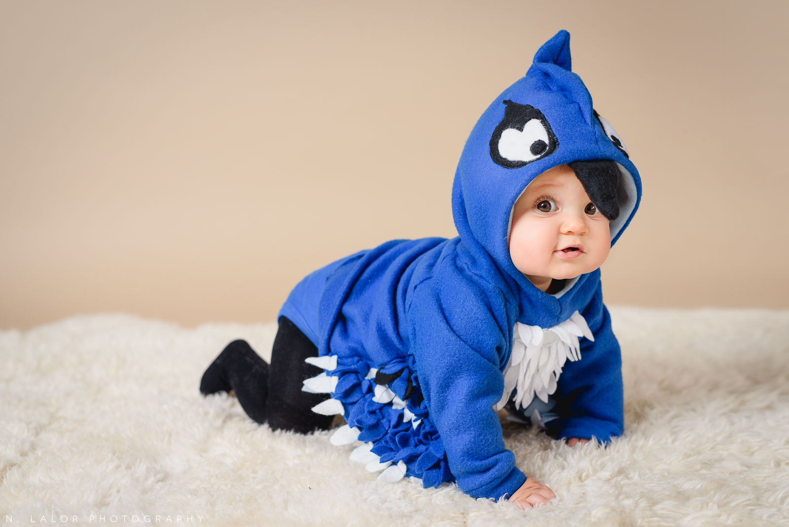 Baby blue jay. Kids Halloween costume portrait by N. Lalor Photography in Greenwich, Connecticut.