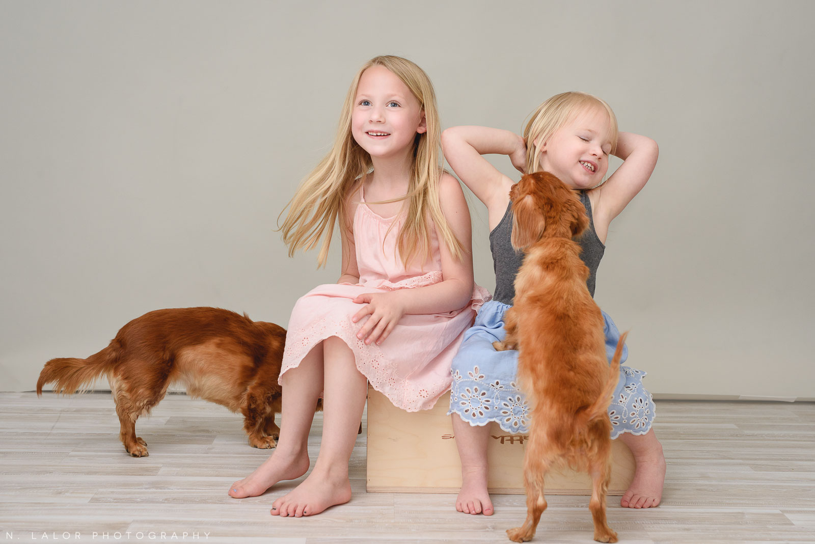 Girls with the family dogs. Family photo session with N. Lalor Photography. Greenwich, Connecticut studio photographer.
