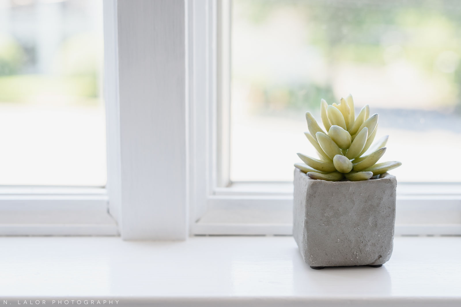 N. Lalor Photography Studio - a little plant on the windowsill.