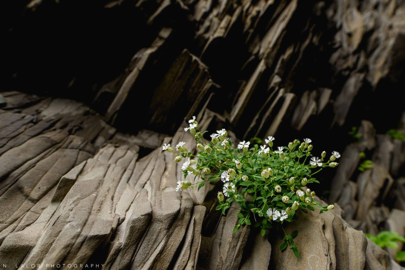 Plants in the Hálsanefshellir cave at the black sand beach - only visible during low-tide. From my trip to Iceland in 2018. Photograph by Nataliya Lalor.