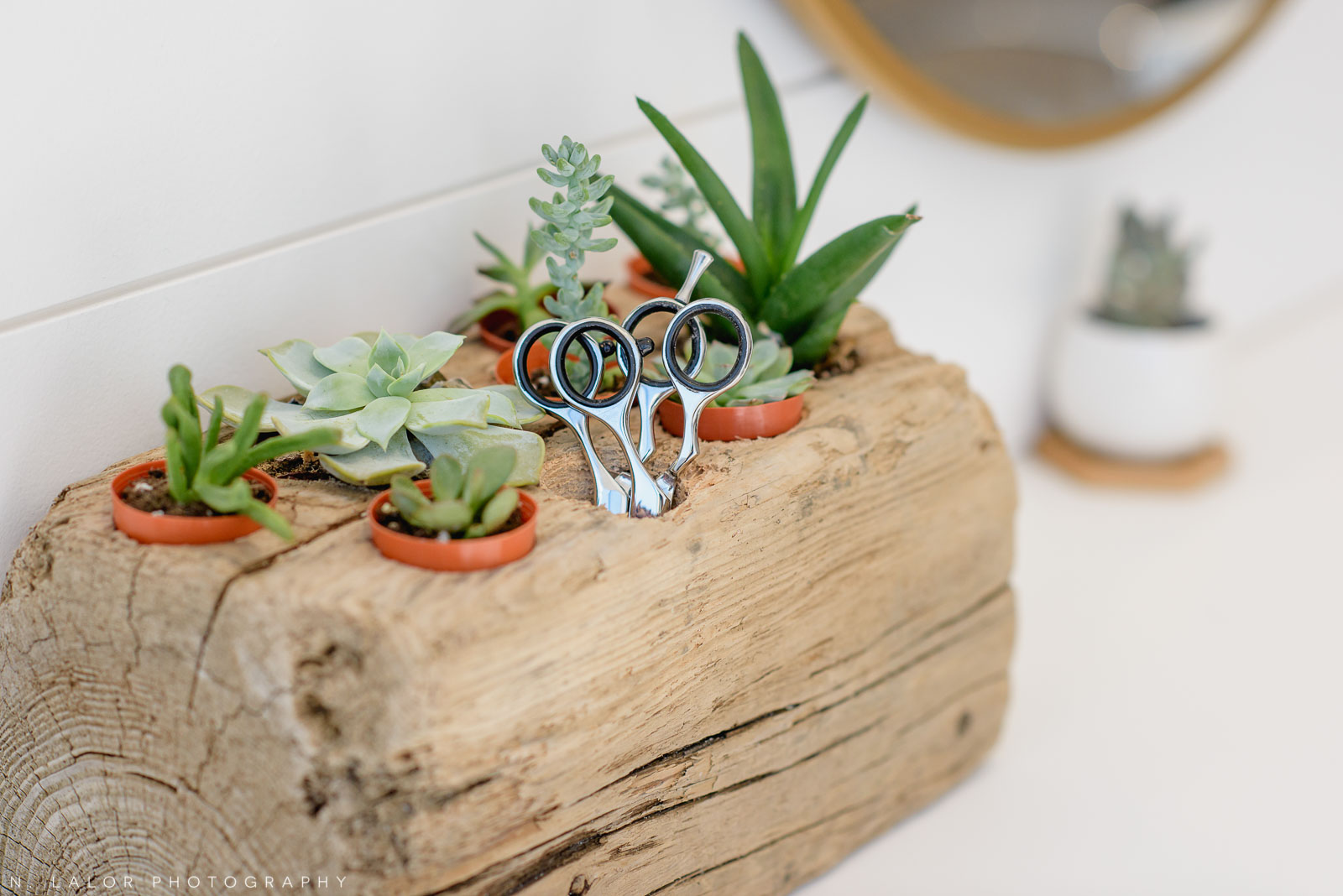 Driftwood and succulents, Haus of Pretty in Westport, CT. Photo by N. Lalor Photography.