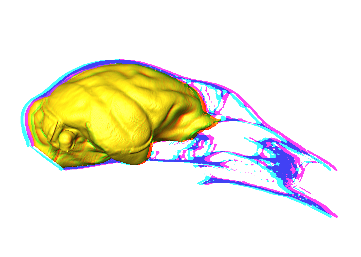 3D rendering of lemur endocast and associated midsagittal cranial tomorgraph