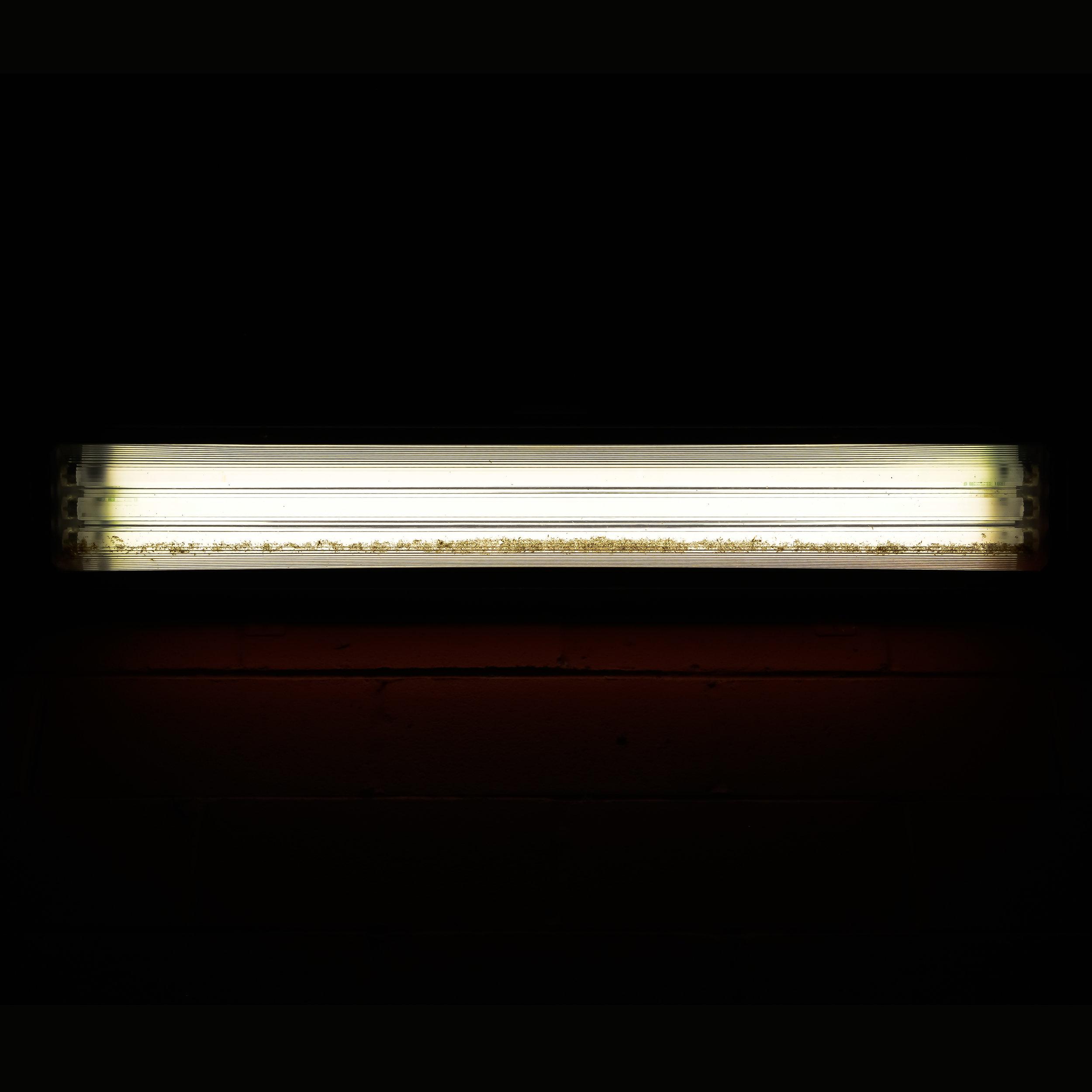 LIGHT SERIES-60616 8pm.jpg