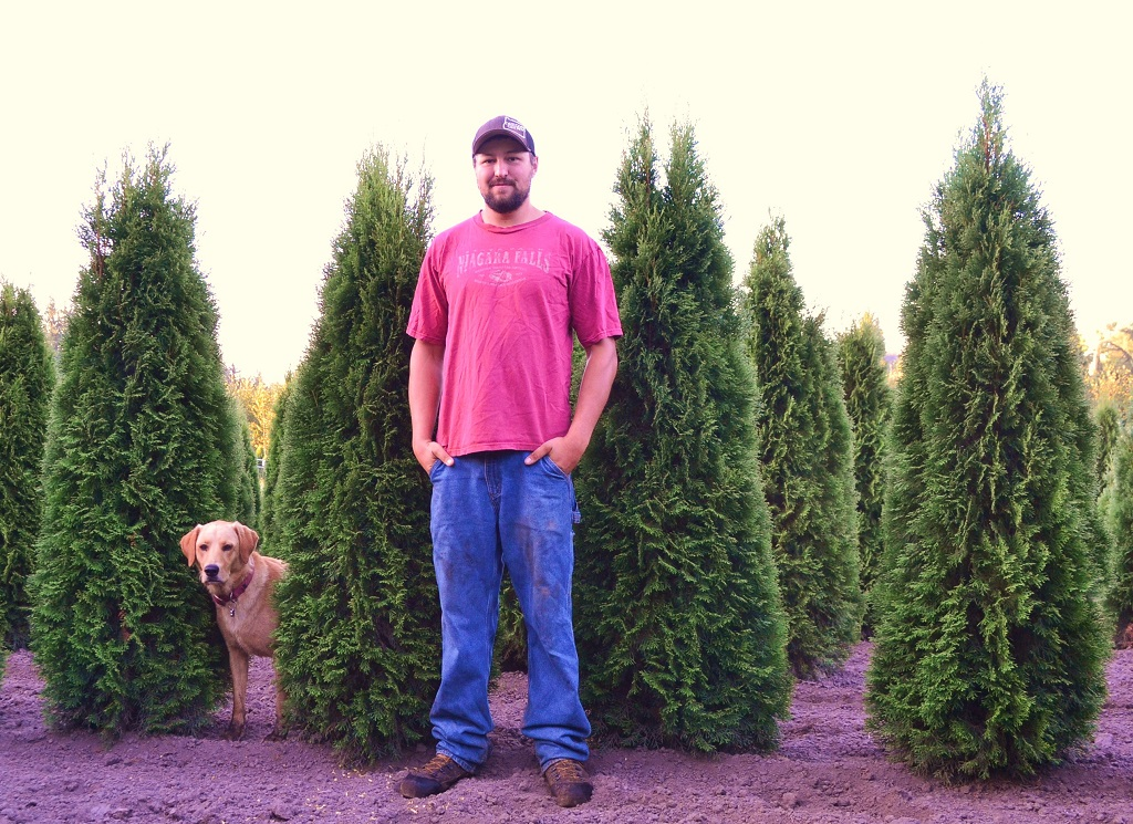 Emerald Green Arborvitae  Thuja Occidentalis Smaragd  Lars and Smokey the dog with some Arborvitae during Spring 2014.