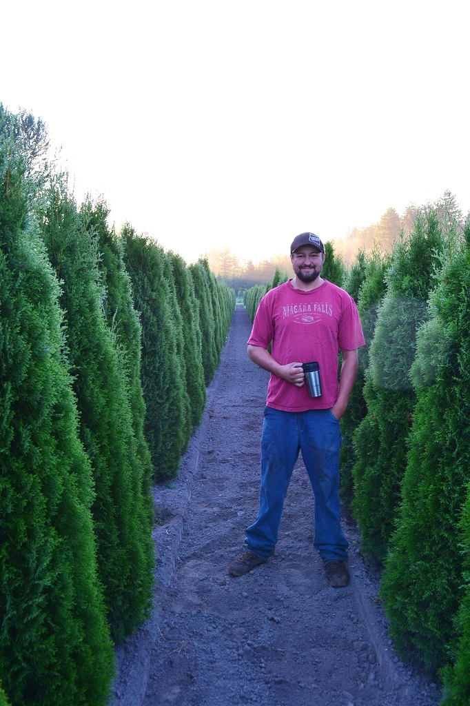 Emerald Green Arborvitae   Thuja Occidentalis Smaragd  Lars with some Arborvitae during Spring 2014.