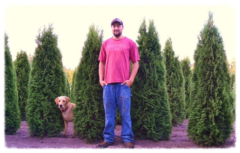 Lars Granstrom is out standing in his field of Emerald Green Arborvitae with Smokey the dog, 2014.