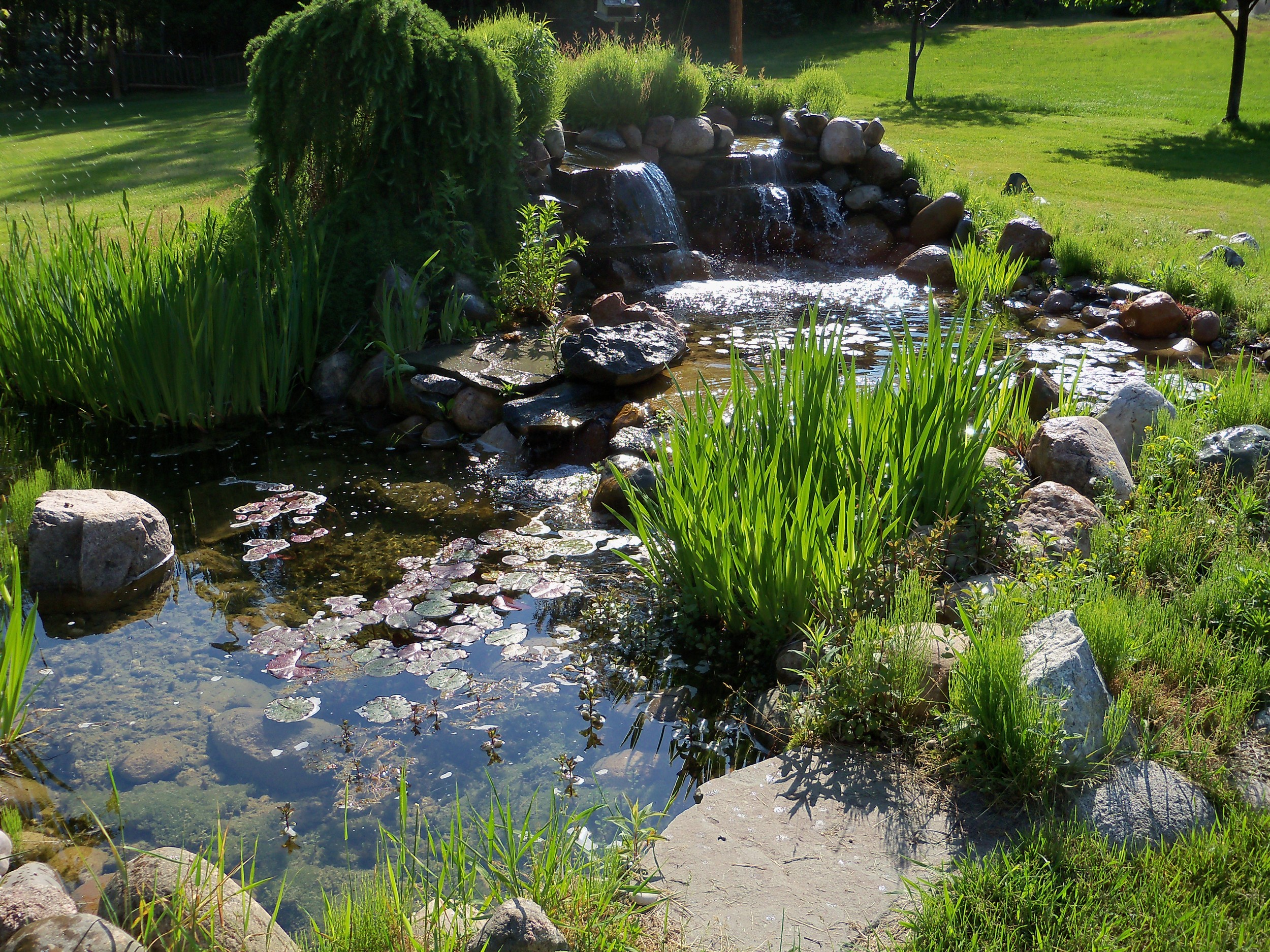 This michigan pond is a frog oasis
