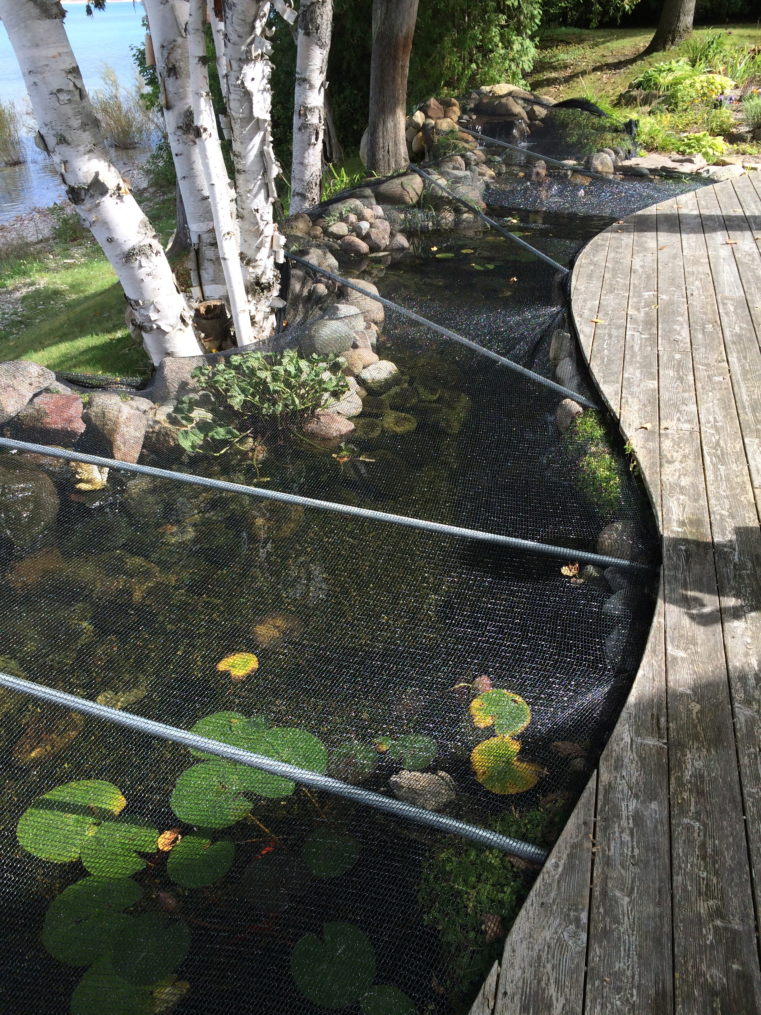 pond nets not only keep out the leaves but they protect your fish from fall predators