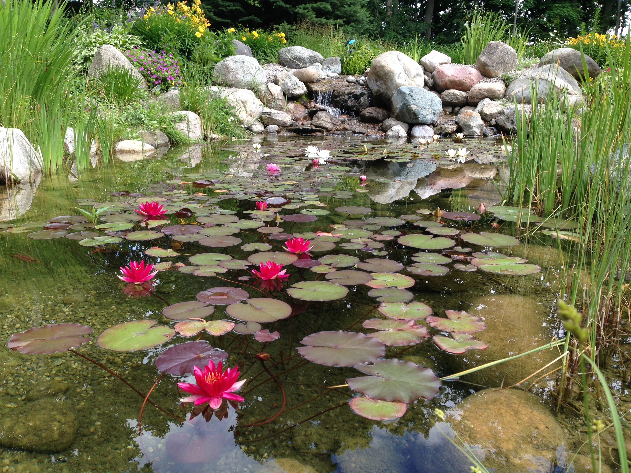 Water Lilies in Harbor Springs Michigan