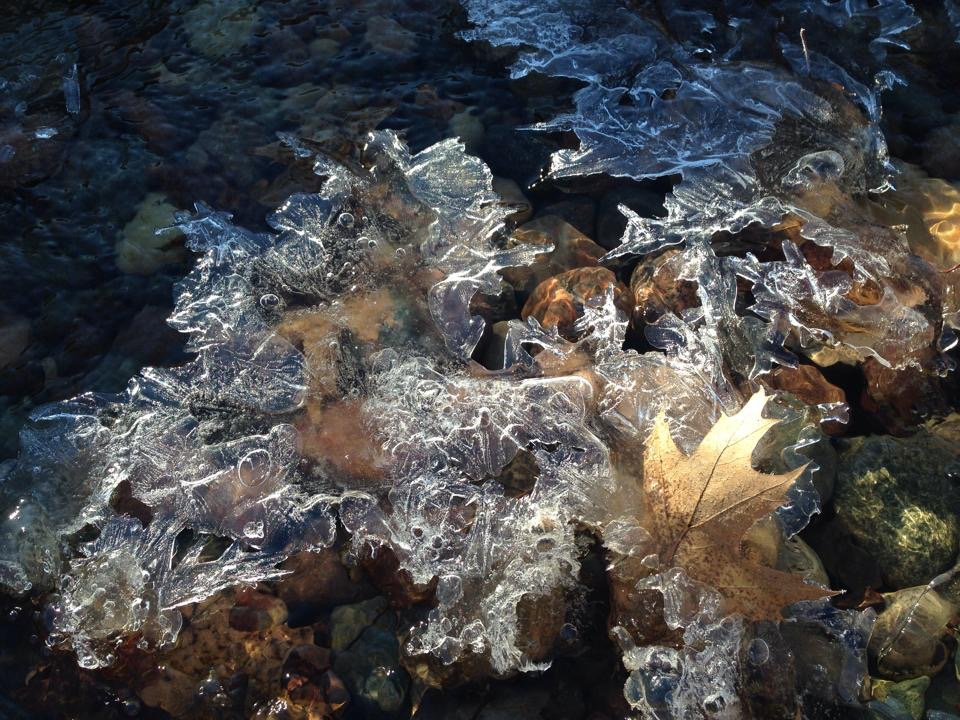 Ice forms over the stream bed and keeps this leaf perfectly placed for the sunrise!