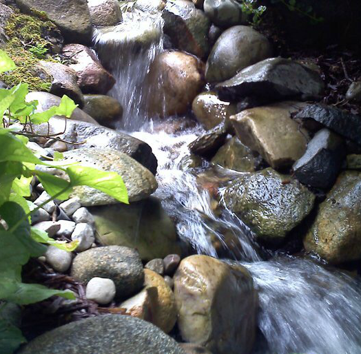 Your new home's water feature might need some TLC initially but soon you will fall in love with your new backyard pond, stream, waterfall, fountain or feature with the help of Waterpaw Ponds of Michigan.
