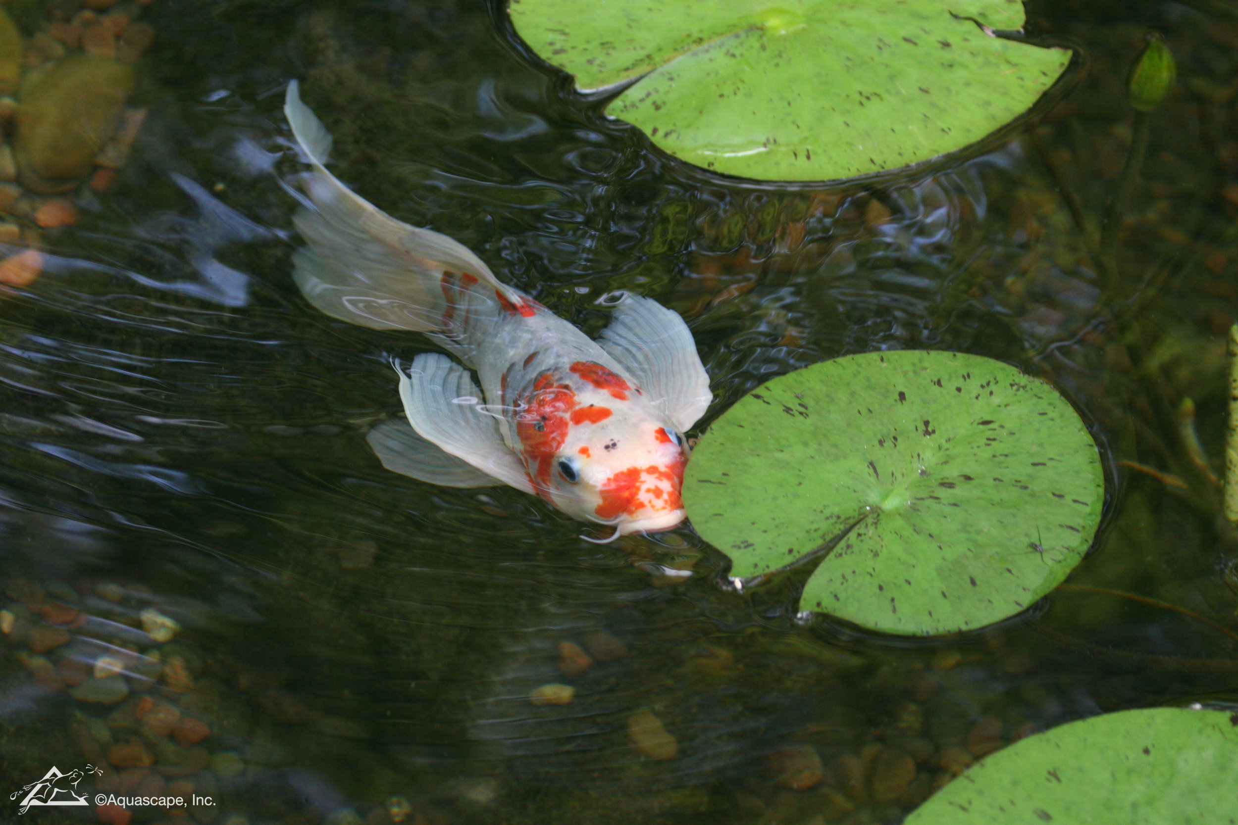 Fish_04.jpg
