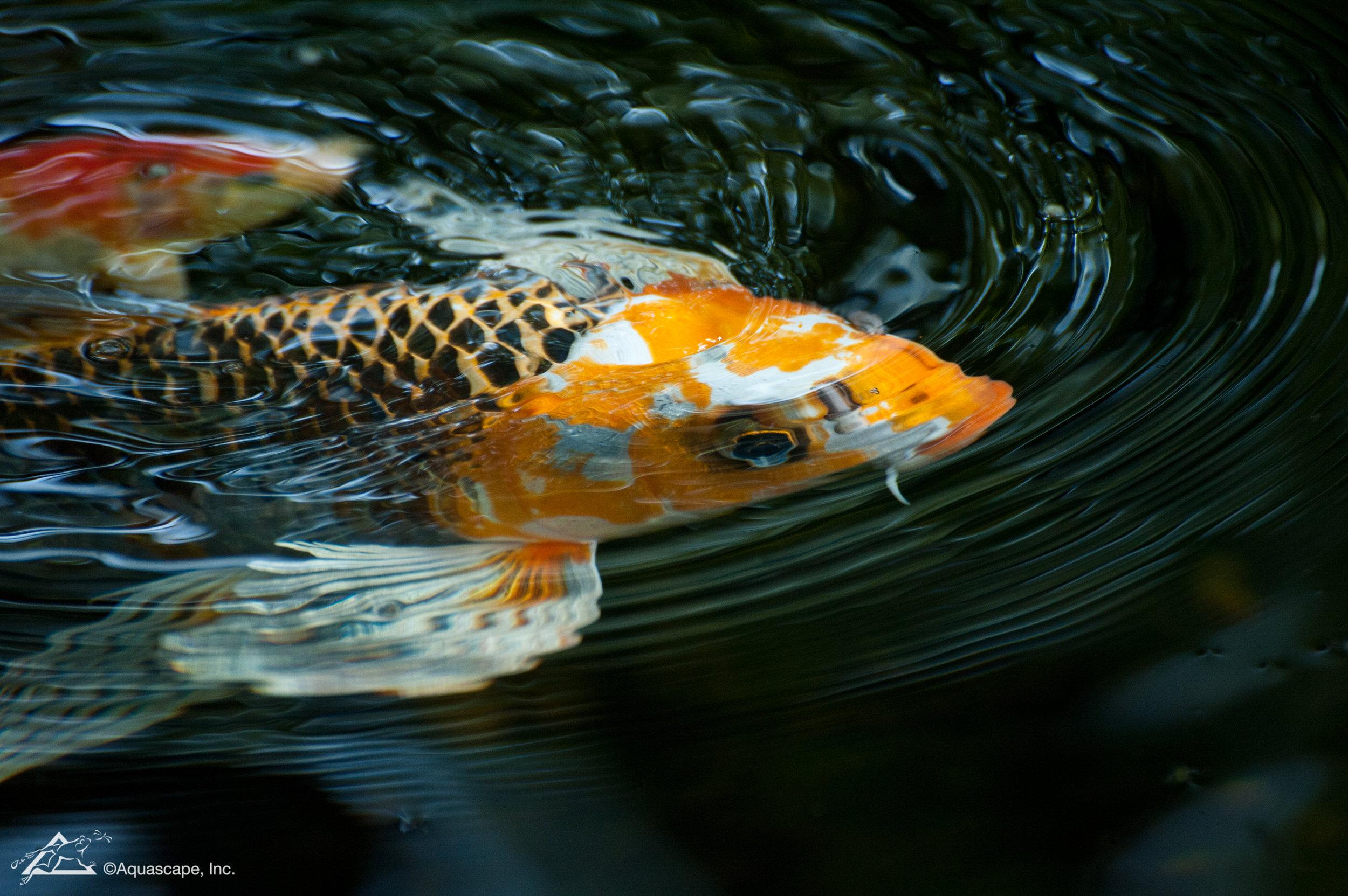 Fish_10.jpg