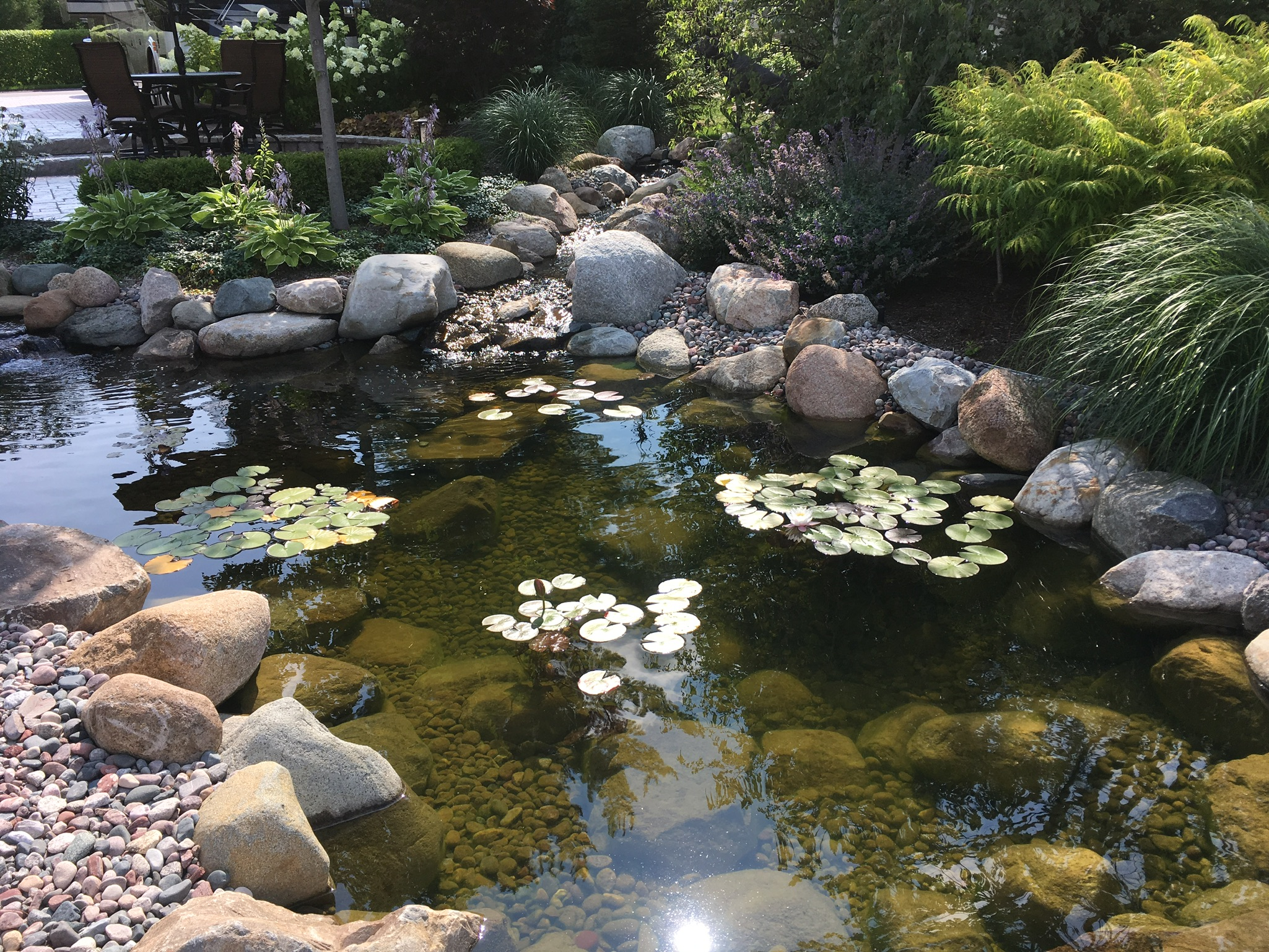 You can see in this established pond that the water is clear, the plants are healthy and the rocks are fuzzy. This is a healthy pond!