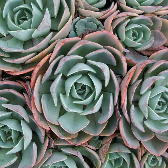 Succulents 1.jpg