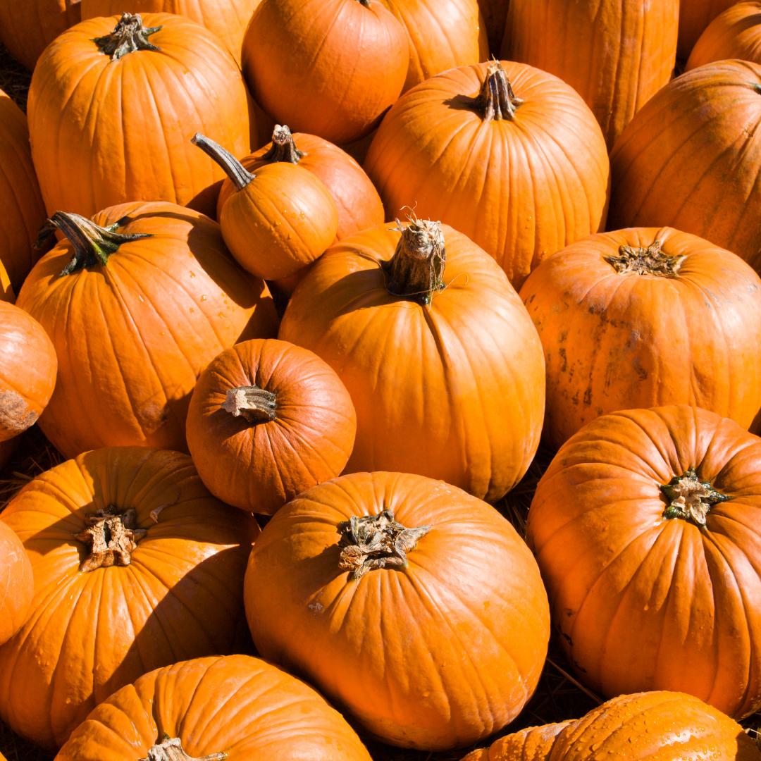 Members Workshop | Pumpkin Decorating Contest | LA