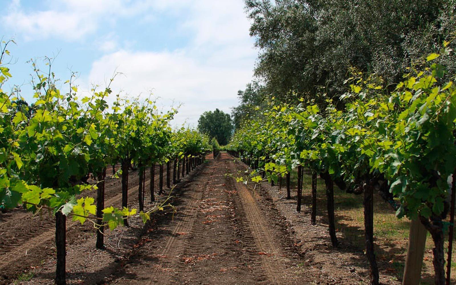 01-vincent-arroyo-winery-california-YELPWINERIES0617.jpg