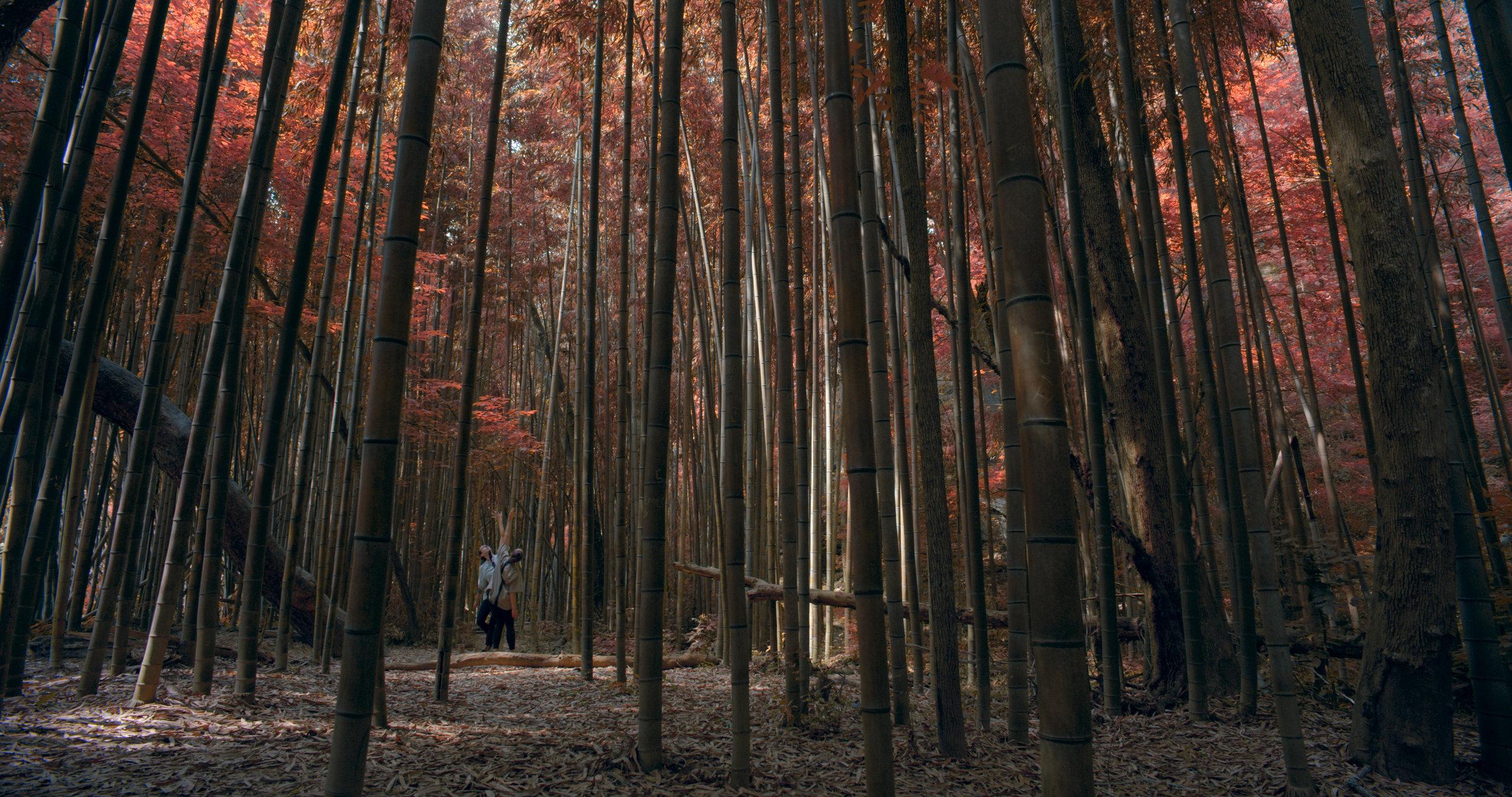 bamboo SG Colored.jpg