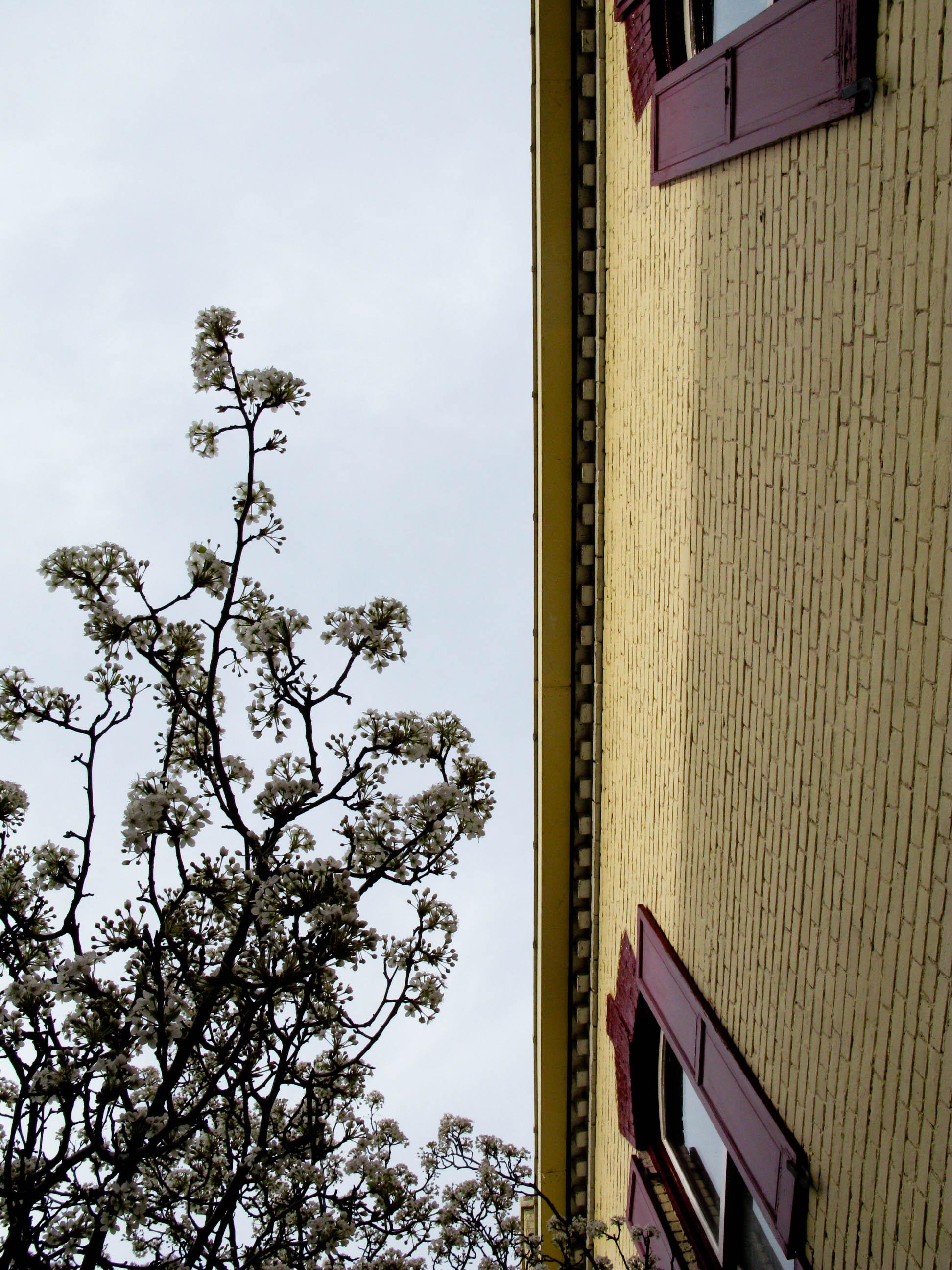 cherry-blossoms_3413889770_o.jpg