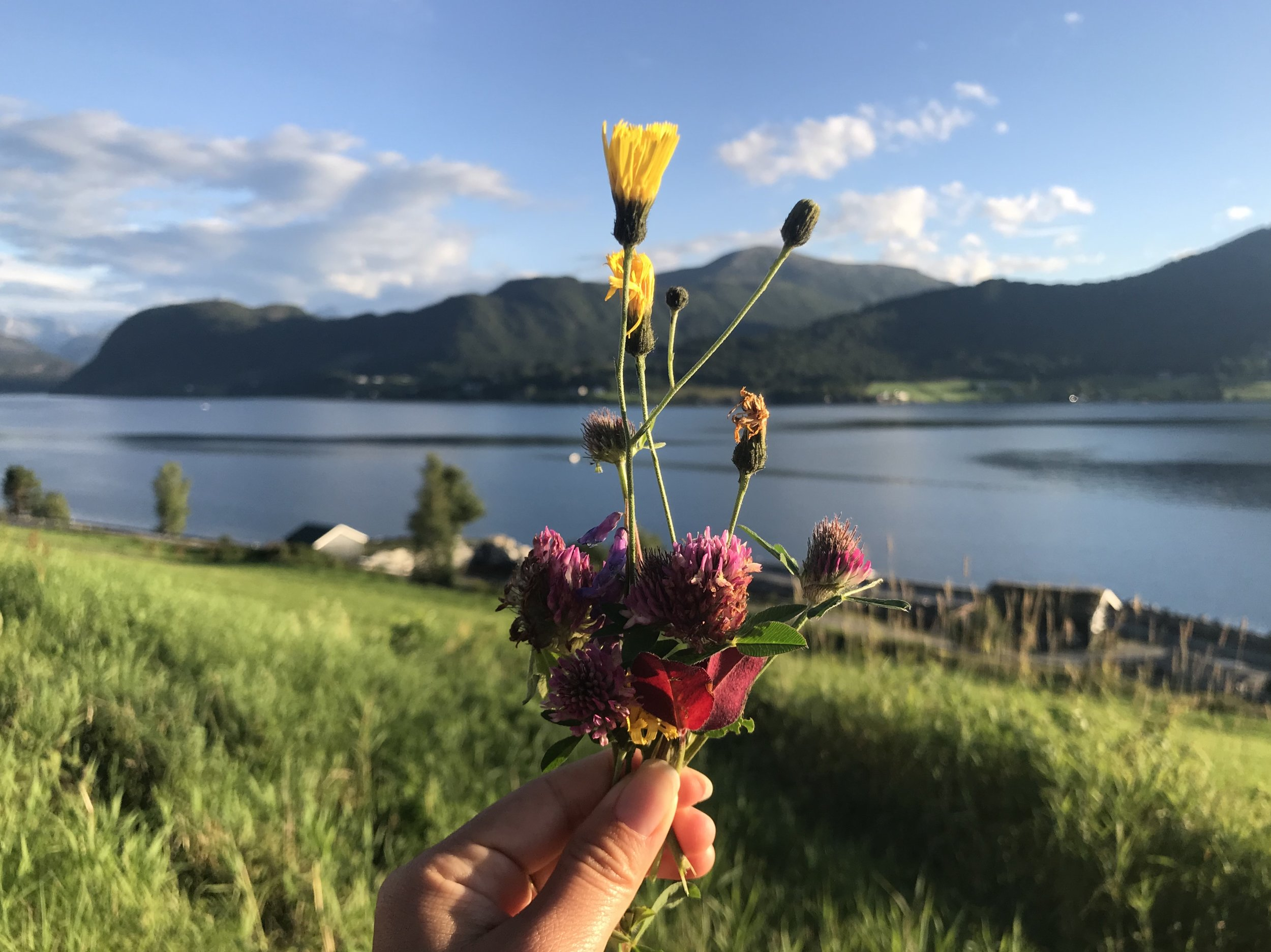 I pick wildflowers during one of my evening runs in Norway