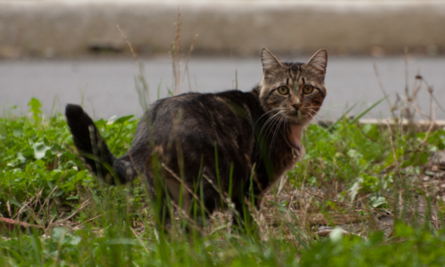 FERAL + STRAY CATS -
