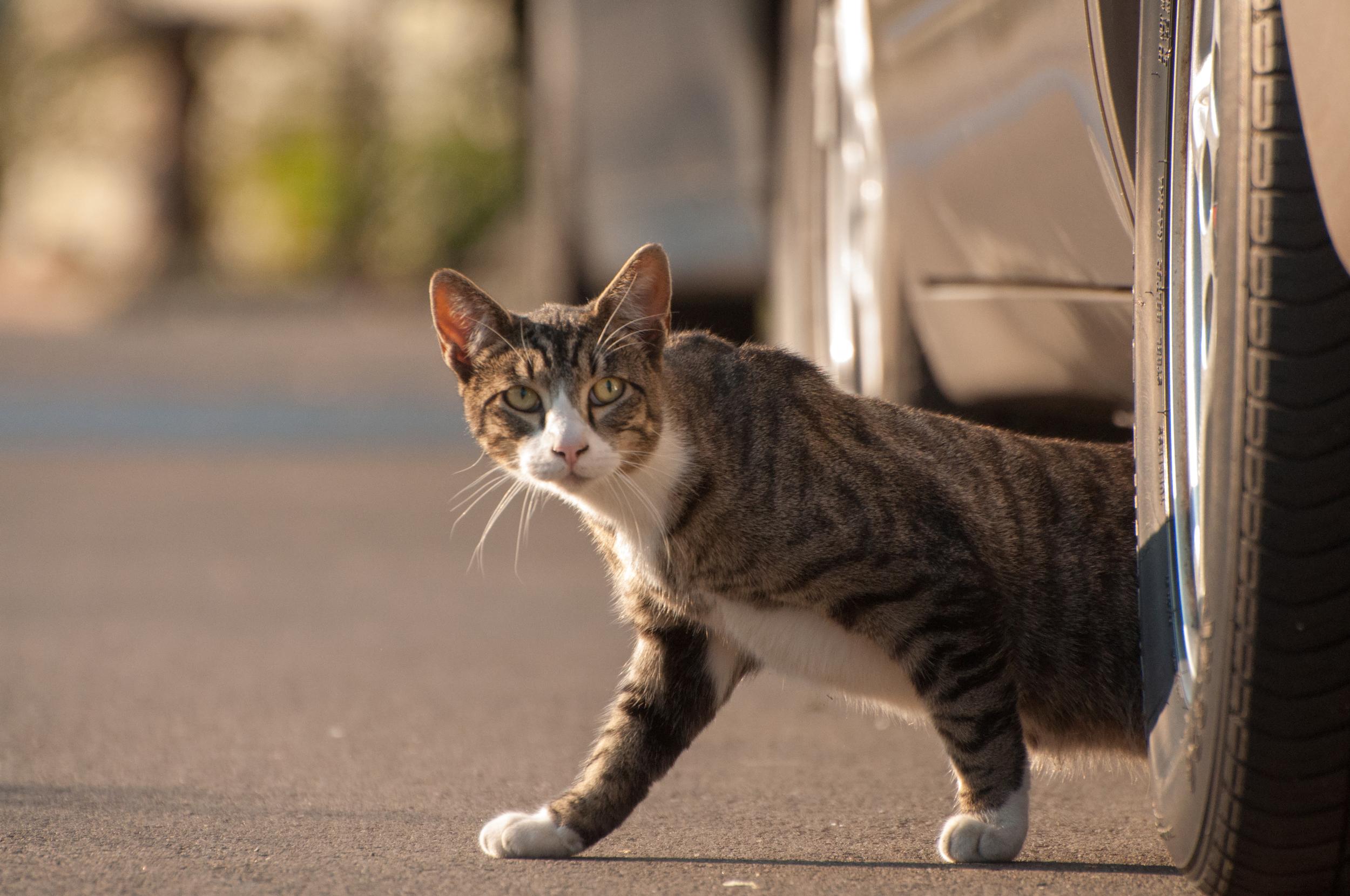 Hayden Island Cat Count 04.jpg