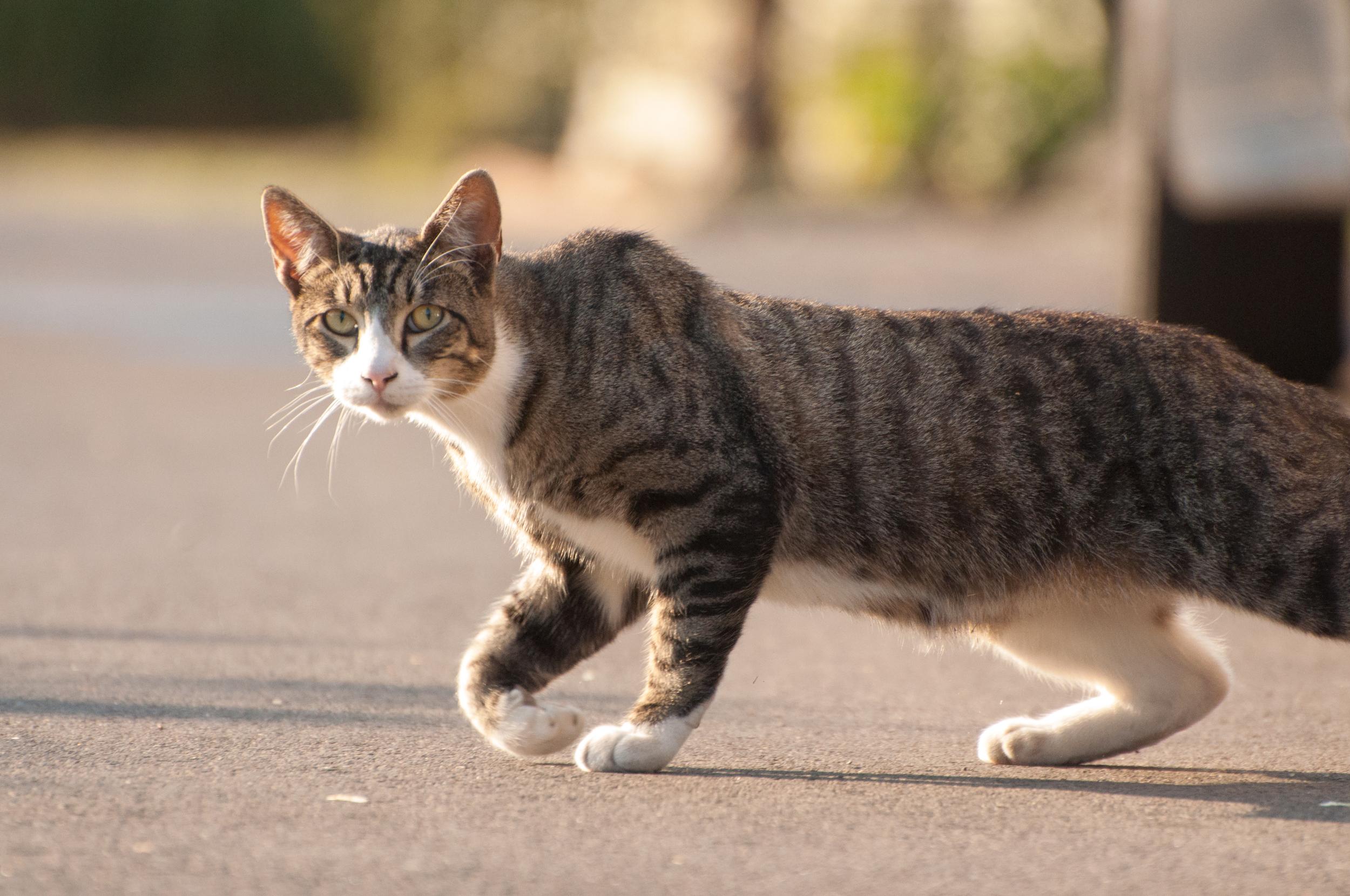Hayden Island Cat Count 05.jpg