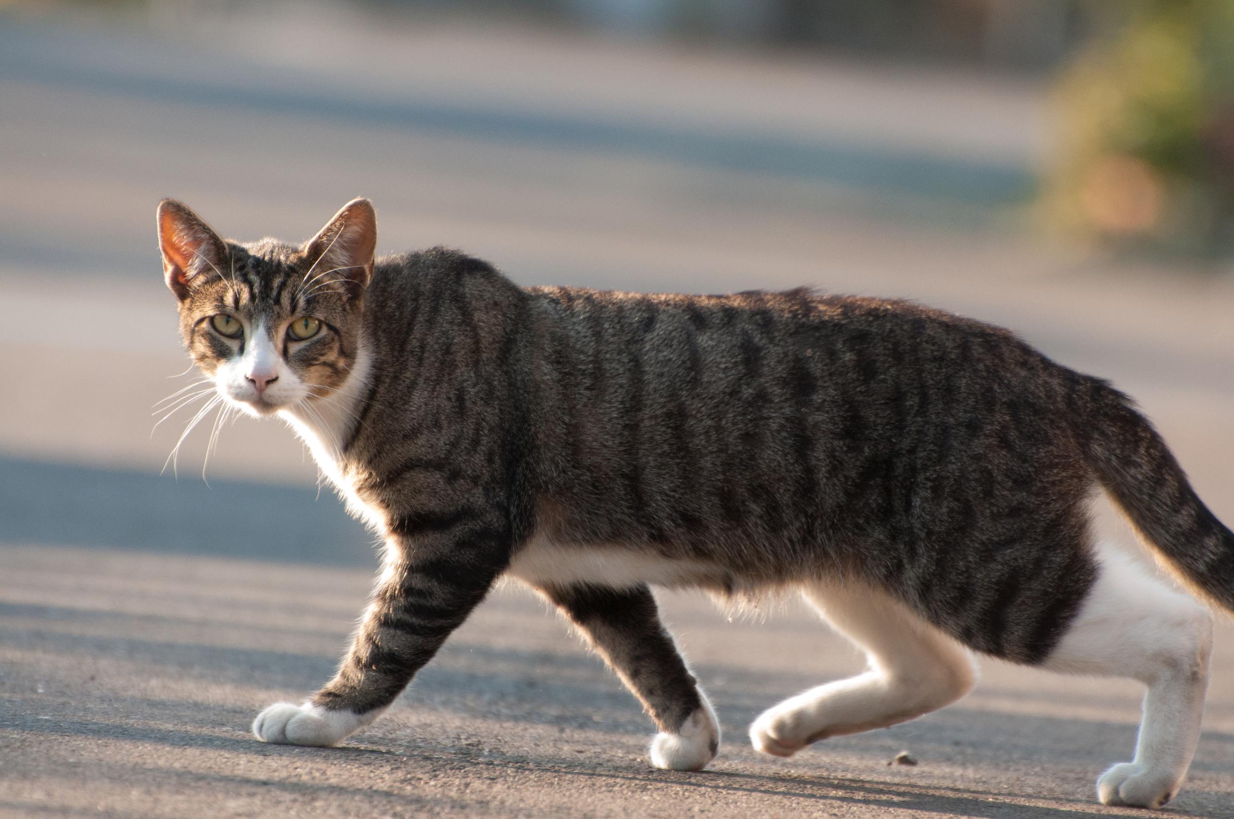 Hayden Island Cat Count 06.jpg