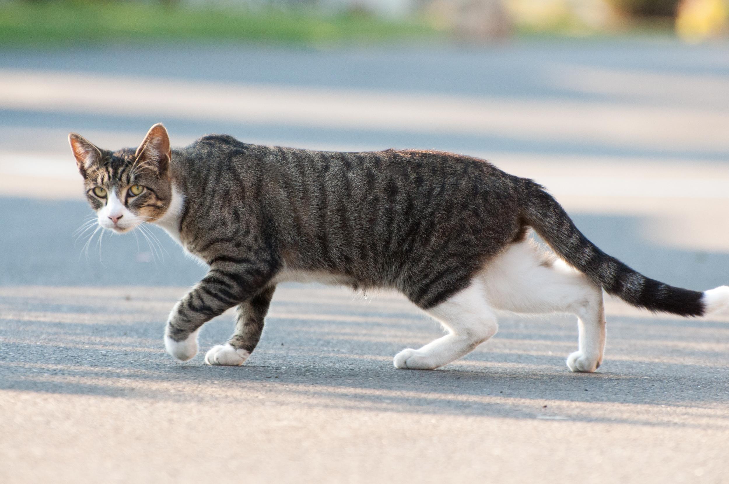 Hayden Island Cat Count 07.jpg