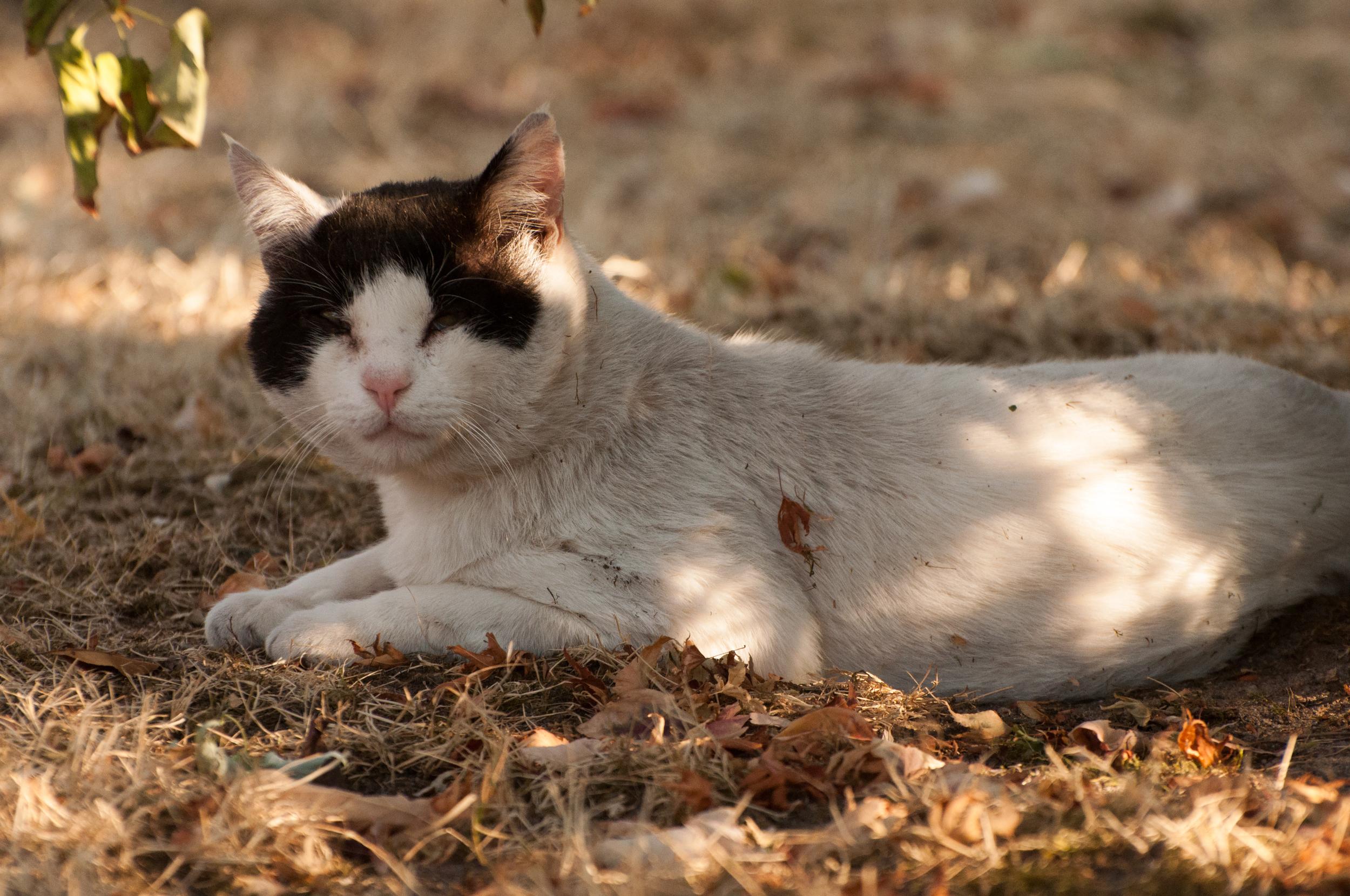 Hayden Island Cat Count 08.jpg
